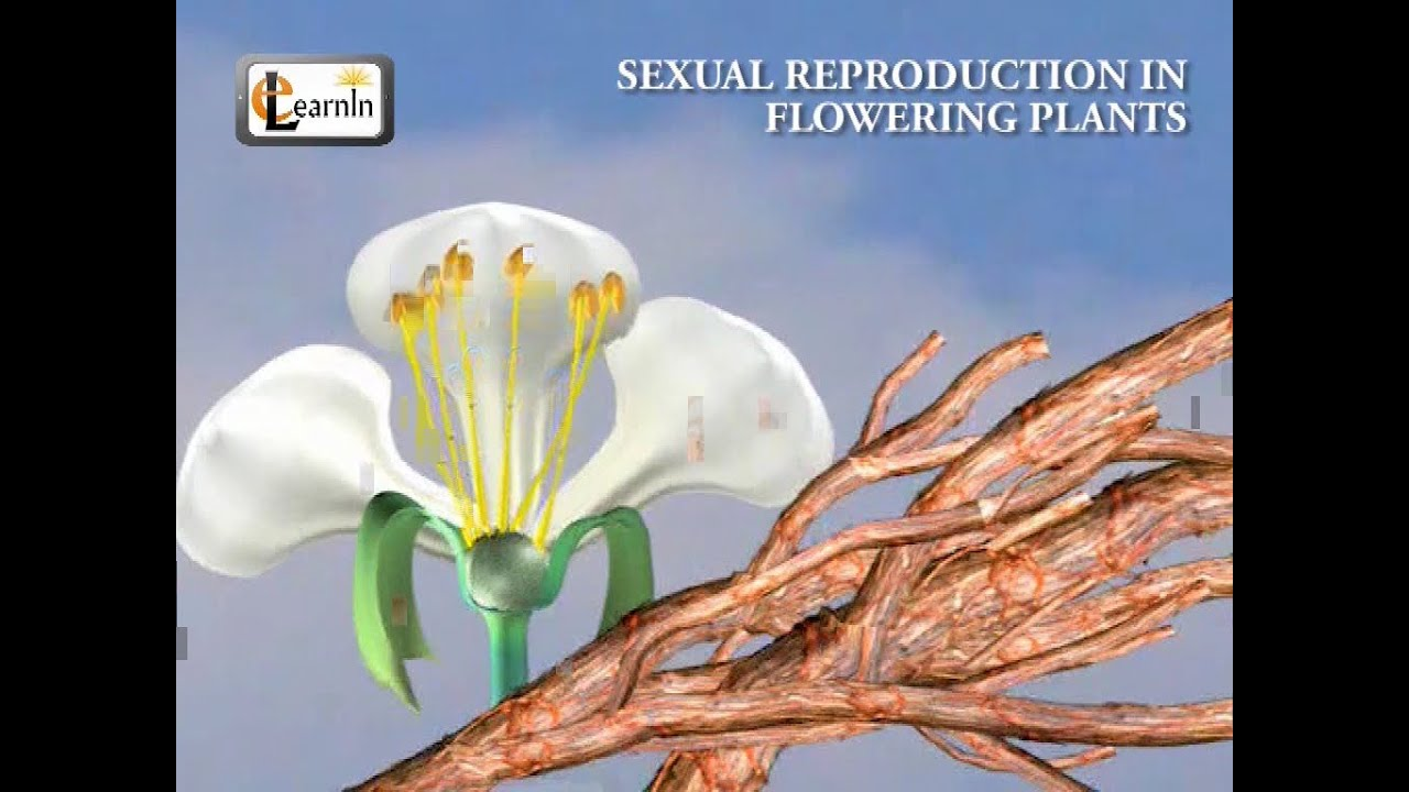 Flowering plants reproduce asexually and sexually