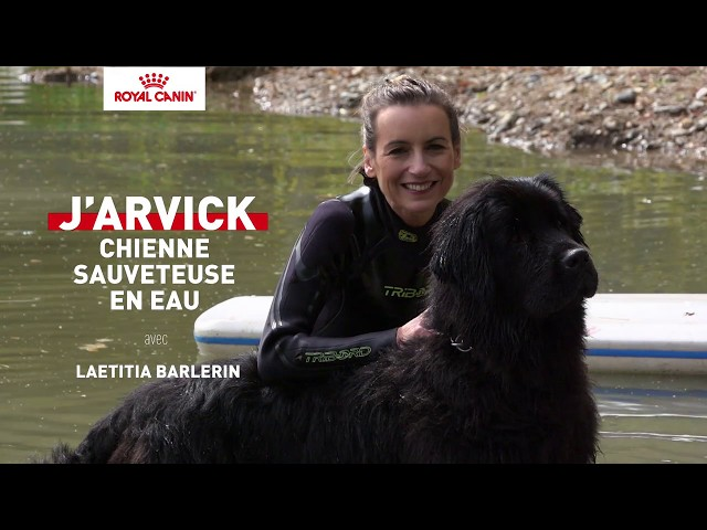 J'ARVICK, chienne sauveteuse en eau