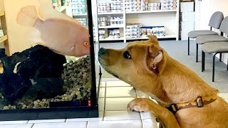 WARNING! You will SUFFOCATE form LAUGHING - Funny DOG compilation