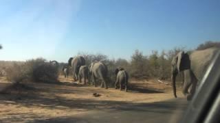 UCMP Blogpost - Elephant Parade