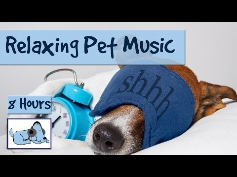 8 HOURS OF RELAX MY DOG MUSIC!! Longest Video Yet! Relaxing