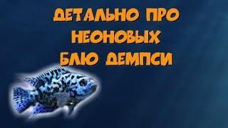 Детально про неоновых Блю Демпси