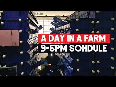 A day a the Mud Crab Vertical Farm with RAS | Aquaculture Operations