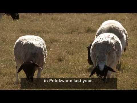 Living Land - Episode 5: Indigenous Farming