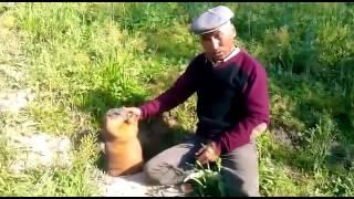 Житель Базар-Коргона Е. Жолдошбаев тримає сурков, яких годує хлібом