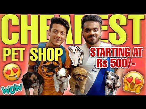 CHEAPEST PET SHOP   DOGS STARTING AT RS 500/- 😱    VIKAS PET SHOP