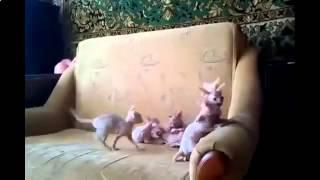 бездомные котята видео