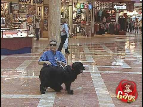 Dog Farts Prank