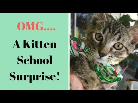 Kitten School SURPRISE! Update & Happy News!