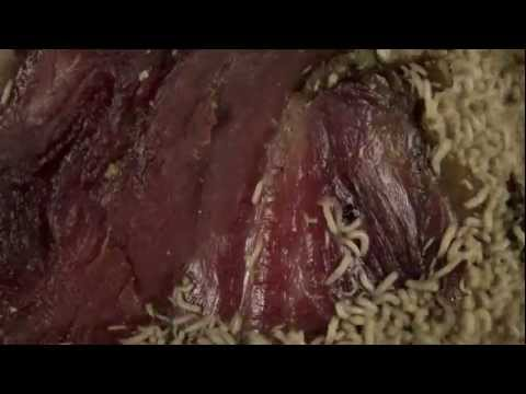 time lapse maggots eating meat HD