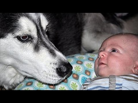 Babies and dogs talking – Funny dog & baby compilation