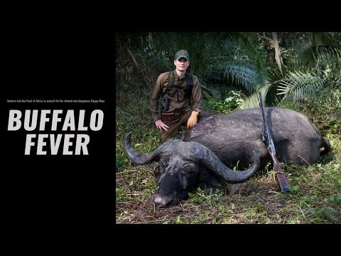 Buffalo Fever - Hunters Video