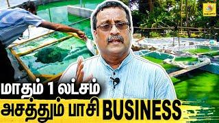 Algae Business in Chennai