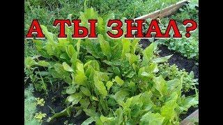 ИЮНЬ-ИЮЛЬ: выращиваем зелень