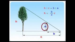 Triangulos Semejanttes