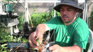 Greenhouse Diary: Cleaning and Autumn Seed Transplanting | September