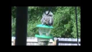 mr. squirrell 2 Thumbnail