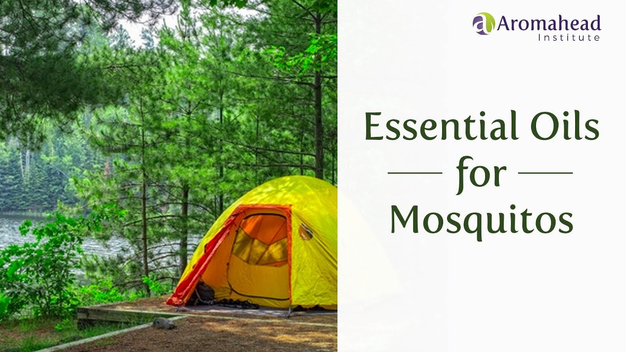 Essential Oils for Mosquitos