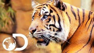 Hunter The Tiger Won
