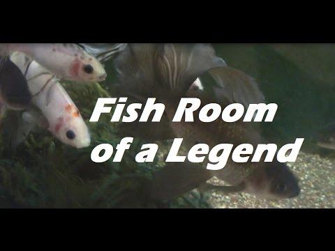 Legend Mike Hellweg's Fish Room Tour - Planted Aquariums & Aquatic Plants