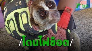 """ช่วยเหลือ """"ลิงลม"""" นอนเจ็บอยู่ข้างทาง ถูกไฟฟ้าช็อตแขนเป็นแผลเหวอะ   Thairath online"""