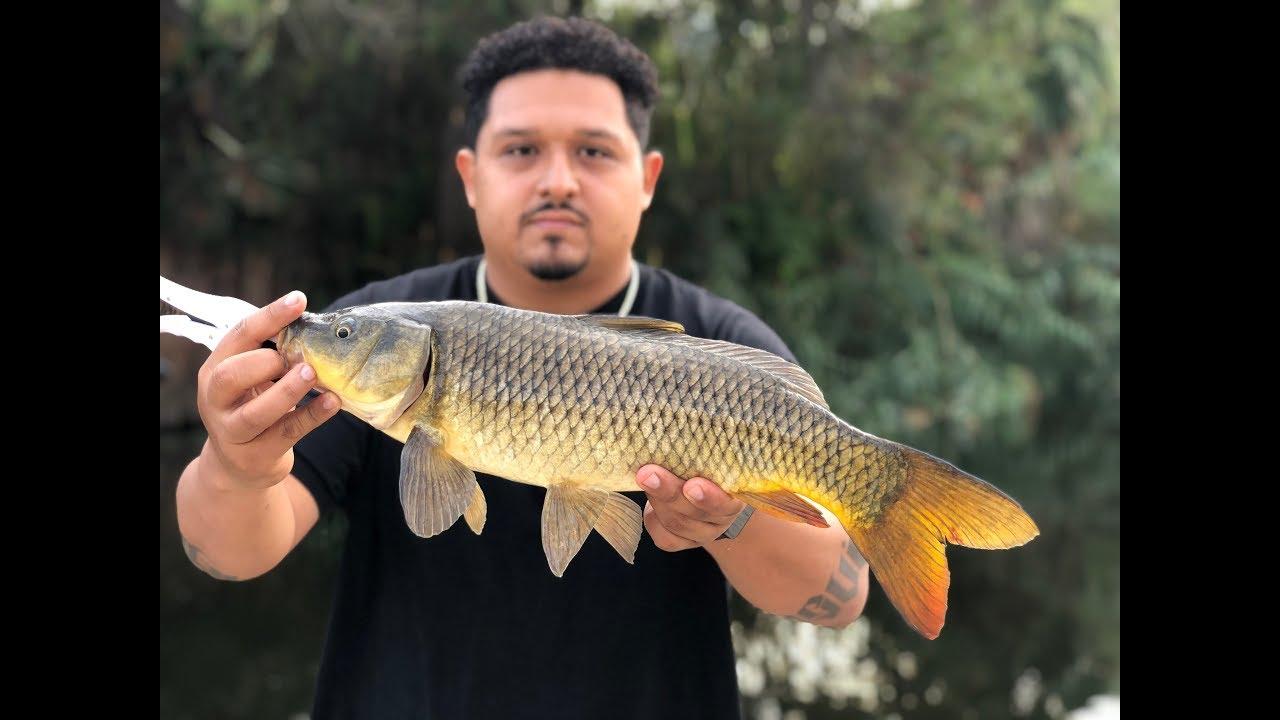 Carp Fishing in LA River - YouTube