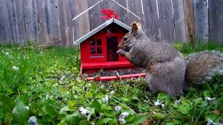 12 Hour Birdhouse Video For Cats  Blue Jays, Squirrels, Various Birds
