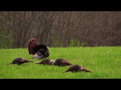 Kentucky Eastern Turkey Hunting With Cabela's Outdoor Adventures