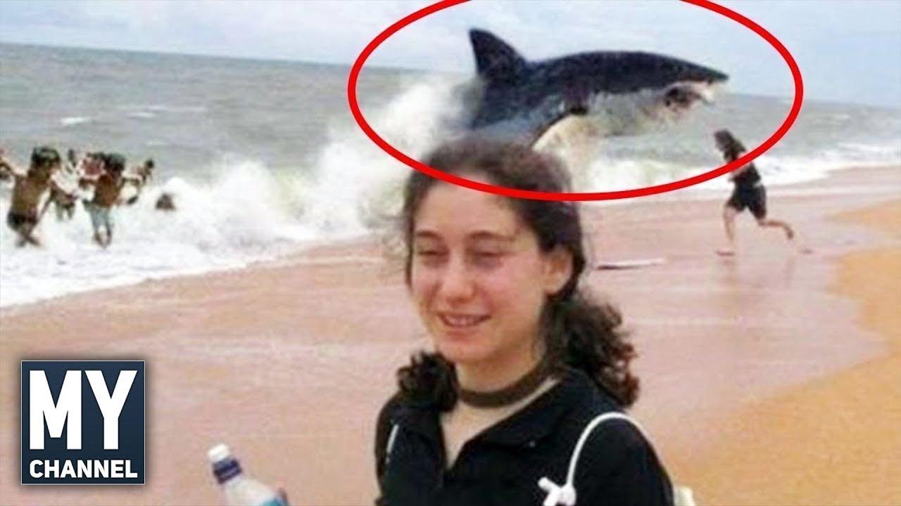 5 İnanılmaz Köpekbalığı Saldırısı (Hayvanlar Alemi, Hayvan Saldırıları) #2