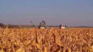 Уборка участка гибридизации кукурузы НС 2014