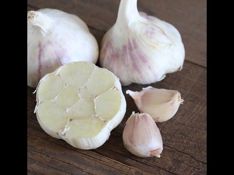 Sustainable Organic Garlic 2015