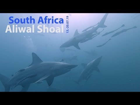Diving South Africa: Aliwal Shoal 2019 - Tauchen In Südafrika