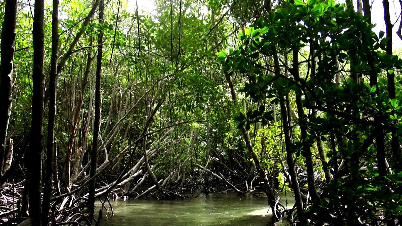 Mangrove Forest Nusa Lembongan Youtube