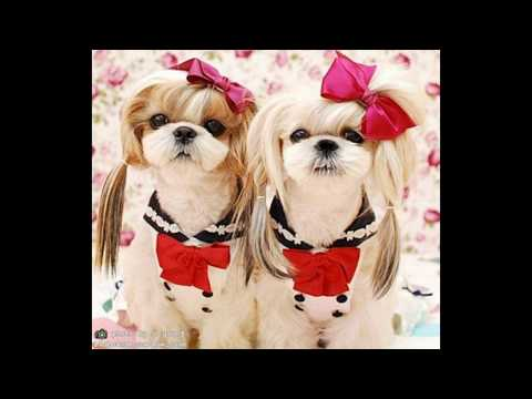 Песня про собаку. Собака, которая не линяет, не воняет, не лает)) идеальная собака.