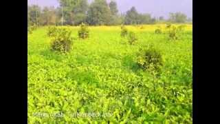 Mere Allah Tu Kareem Hai - Naat in Punjabi (no music)