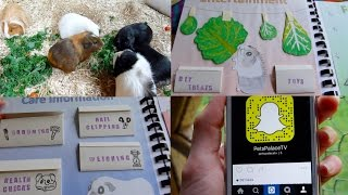I Made a Guinea Pig Book & Add me on Snapchat