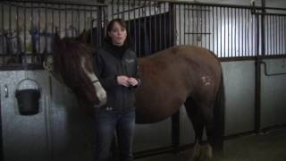 Signs to Watch for in Foaling Mares
