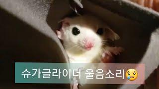 푸우와 첫만남때 (feat.슈가글라이더울음소리)
