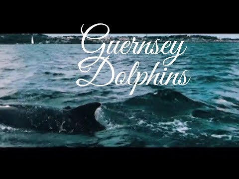 Dolphins outside Guernsey....