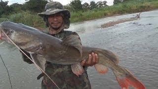 แรงจัด..!! เกือบไม่ได้ตกปลา..? ปลากดคัง มันไม่ใช่ของผม ผมแค่แว้นมา ตีปลากระสูบ [ งัดวัง ]