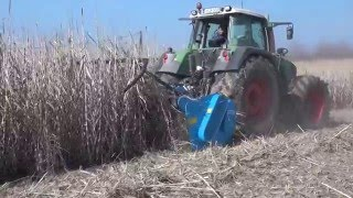 Demo harvesting of an Arundo donax plantation in Hungary by Arundo Celluloz Farming ltd.
