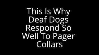 Training Deaf Dogs