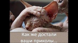 Сфинксы - кошки! Надоели им приколы! / Sphyncs cat