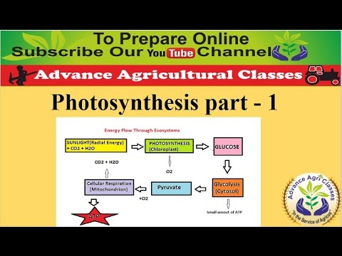 Photosynthesis part - 1 (Hindi/English) Agricultural Field Officer IBPS