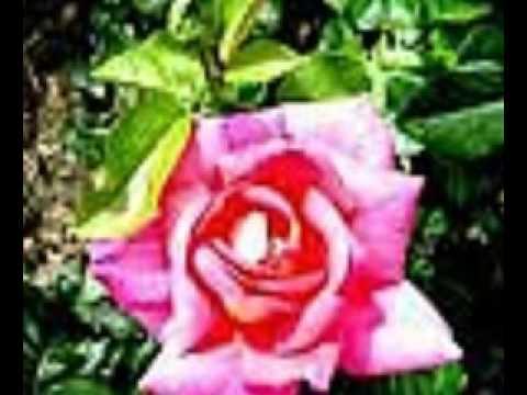 Eres La Flor Mas Bella Del Jardin