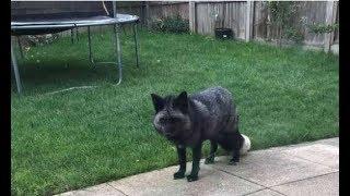 Что за диковинный зверь у нас во дворе? Семья рассматривала странное животное, заглянувшее в гости…