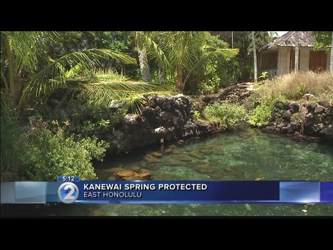 Ancient freshwater spring permanently protected in East Honolulu