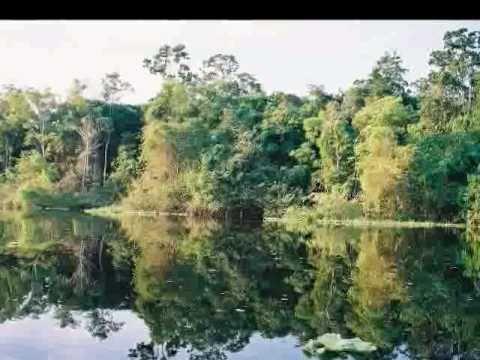 AMAZONIA   BRAZIL