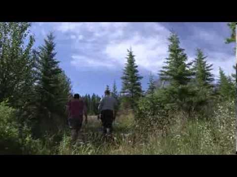 The Alberta Story: Banff Wildlife Crossing