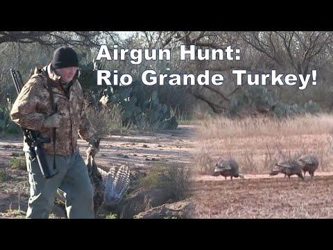 Airgun Hunting Rio Grande Turkey! The AirForce Texan .357
